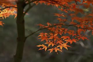 maple-tree-in-fall-art_wallpaper